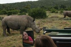 Rhinos - how close!