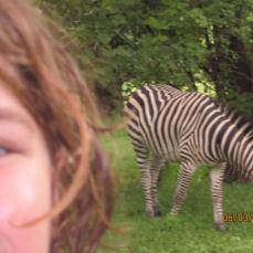 Zebra in hotel